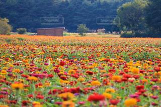 山中湖花の都公園 - No.1016027