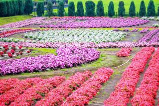 山中湖花の都公園 - No.1016788