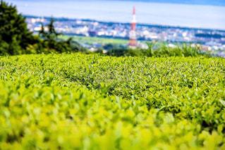 お茶畑 - No.1049845