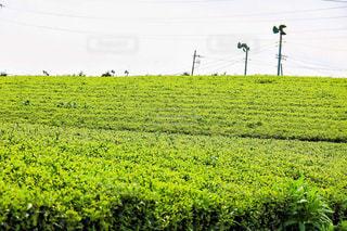 お茶畑 - No.1049847