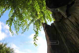 花の都公園のしあわせの木の写真・画像素材[1094489]