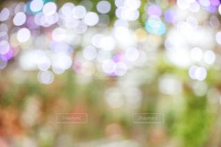 玉ボケの写真・画像素材[1098069]