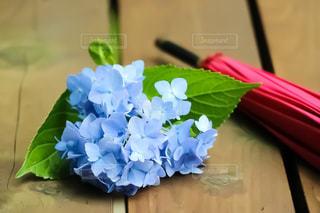 傘,紫陽花,梅雨,アジサイ