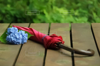 傘,紫陽花,梅雨,アジサイ,傘と紫陽花