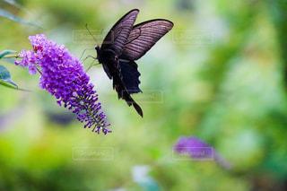 花と蝶の写真・画像素材[1219526]