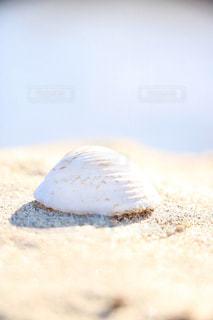 白い貝殻と砂浜の写真・画像素材[1221374]