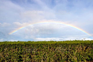 虹,雨上がり,にじ,梅雨の晴れ間