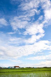青空,水田,田んぼ,田園,雨上がり,梅雨,白い雲,雨上がりの空,広い空,梅雨の晴れ間