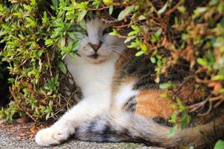 はまってる猫の写真・画像素材[1257748]