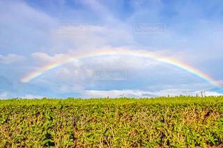 雨上がりの虹の写真・画像素材[1315953]
