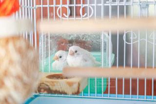 鳥,生き物,水浴び,十姉妹,いきもの,暑さ対策,ジュウシマツ