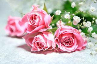 ピンクの薔薇の花束の写真・画像素材[1434689]