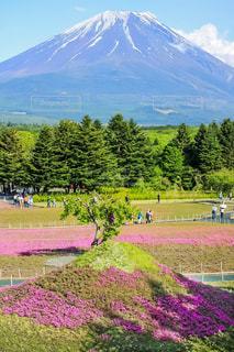 富士山,ピンク,芝桜,山梨県,富士芝桜まつり,富士河口湖町,二つの富士山