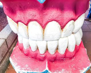 ピンク,歯,ピンクの歯茎,歯の模型