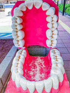 ピンク,静岡県,ピンクの歯茎,歯の模型,ピンクの口の中,開いた口