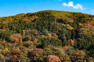風景,秋,紅葉,山,山梨県,秋の空