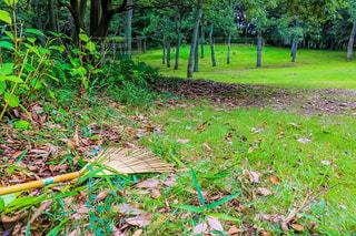 自然,山,落ち葉,自然公園,お掃除,竹ほうき