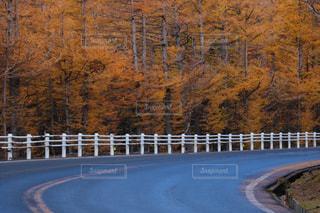 黄色,道路,山,樹木,山梨県,草木,10月,富士山五合目,富士スバルライン,カラマツの紅葉
