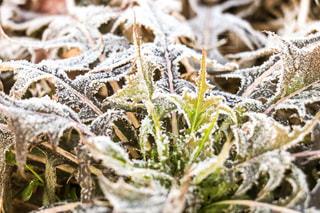 冬,白,葉,霜,凍る