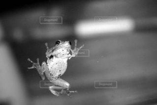 ガラス越しのカエルの写真・画像素材[836031]