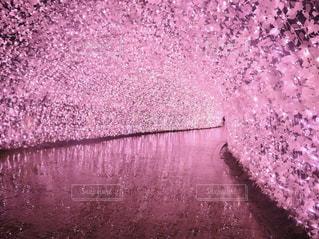 ピンク色のトンネルの写真・画像素材[1792781]
