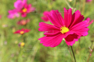 近くの花のアップの写真・画像素材[1794252]