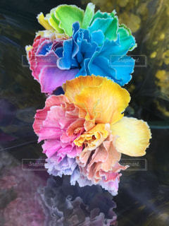 近くの花のアップ - No.890949