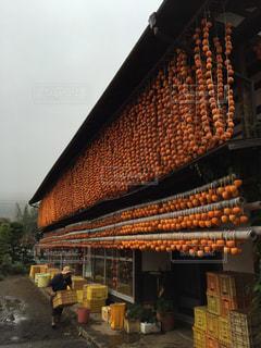 柿いっぱいの写真・画像素材[898694]