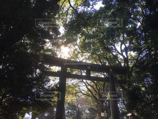 近くの木のアップの写真・画像素材[963509]