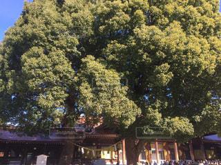 木の隣に立っている人のグループ - No.963524