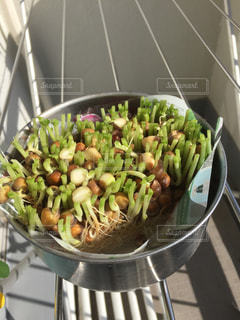 食品のボウルの写真・画像素材[965754]