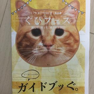 襟付きのシャツを着て猫 - No.985874