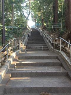 木,緑,階段,光,休日,お出かけ