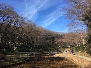 冬,青空,休日,明治神宮,お出かけ,木枯らし
