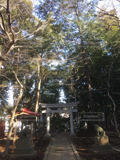 木,神社,鳥居,こもれび