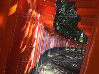 近くにオレンジの木のアップの写真・画像素材[1036735]