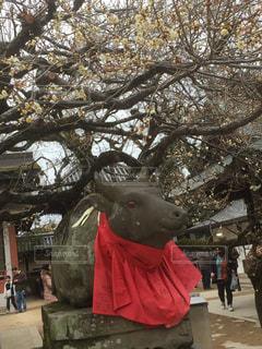 木の像 - No.1036777
