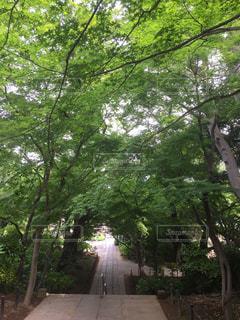 お散歩の写真・画像素材[3167572]