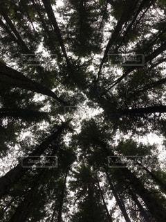 木の写真・画像素材[836136]