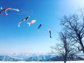 空を飛んでいるカモメの群れ - No.944550