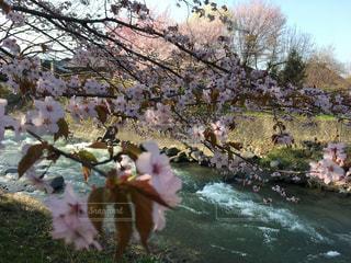 川に立っている人のグループの写真・画像素材[1142577]