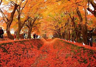 背景の山と木紅葉のトンネルの写真・画像素材[868407]