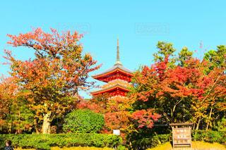 秋の風景の写真・画像素材[870469]