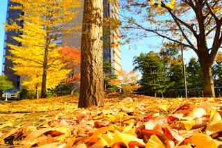 秋の色の写真・画像素材[873612]