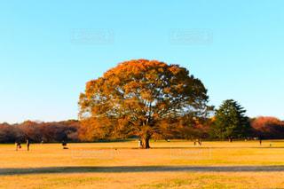 一本の木の写真・画像素材[890569]