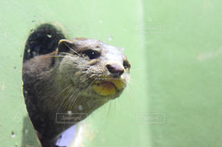 動物,水族館,生き物,休日,カワウソ,お出かけ