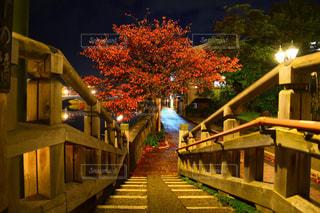 自然,秋,夜,橋,紅葉,階段,川,ライトアップ,道,金沢,11月,茶屋街,主計街茶屋街