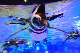 空飛ぶペンギンの写真・画像素材[1692508]