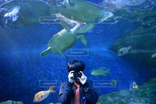 男性,20代,カメラ,青,水族館,男,東京都,海の生き物,水槽,亀,フィルムカメラ,品川,しながわ水族館