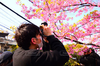 男性,自然,花,春,桜,屋外,花見,お花見,人物,旅,江ノ島,一眼レフ,ライフスタイル,撮る,カメラ男子